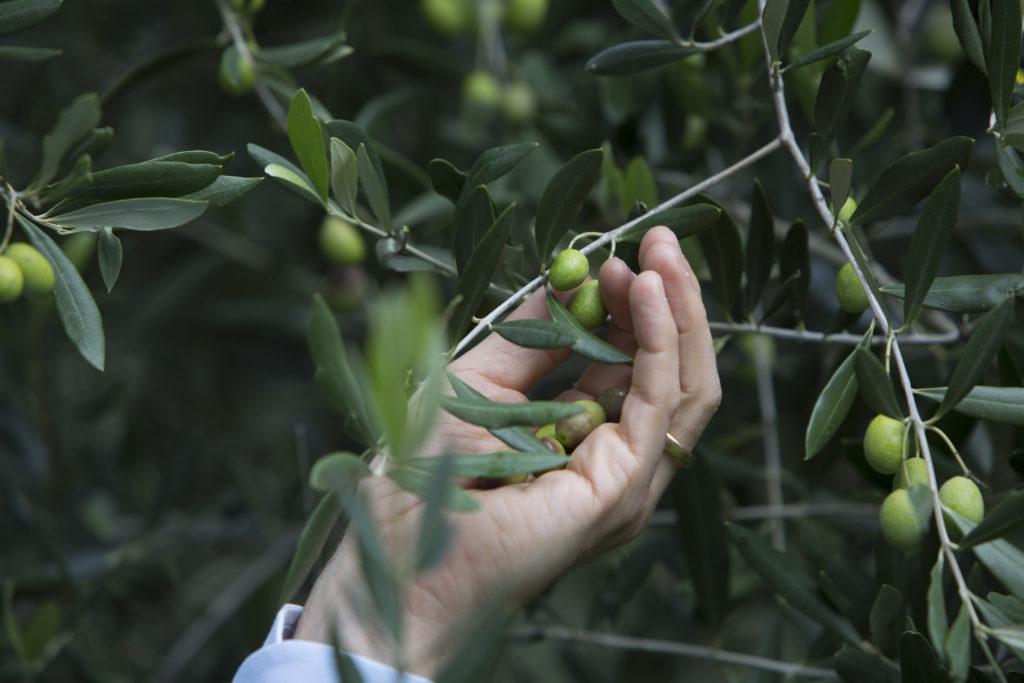 Kvalitetstetser på olivolja