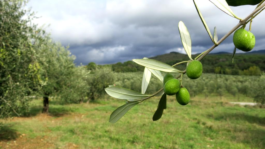 Året i olivlunden
